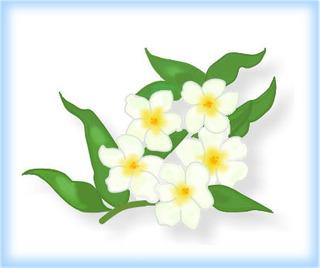しろ花.jpg