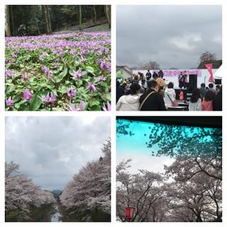 桜ー2.png